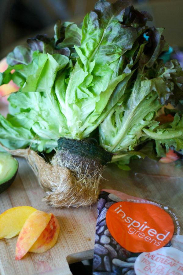 Inspired Greens Living Lettuce | Koko's Kitchen